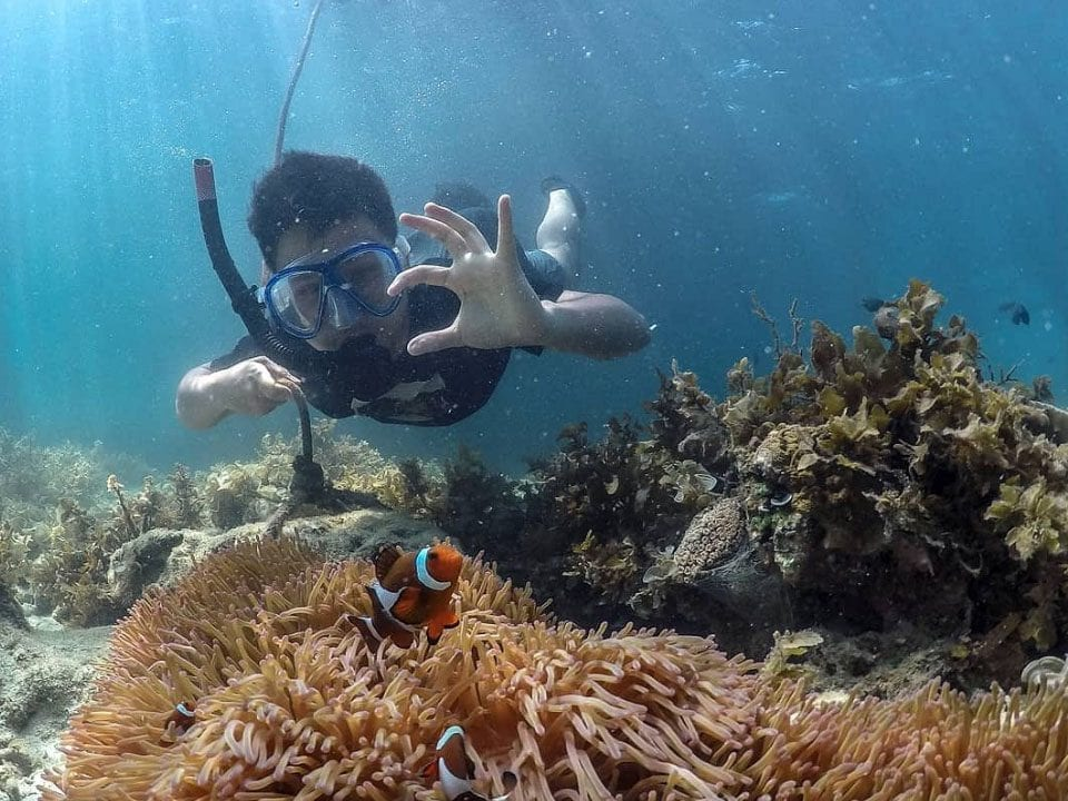 Underwater Adventures: Snorkeling & Diving Day Trips From Batam